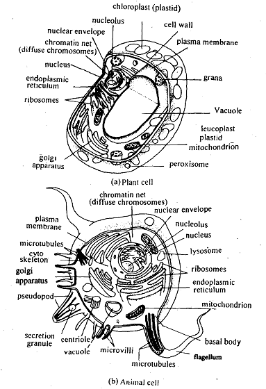 generalized cell figure