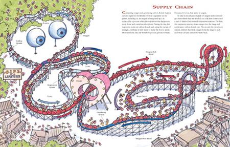 Way We Work Respiratory and Circulatory Coaster