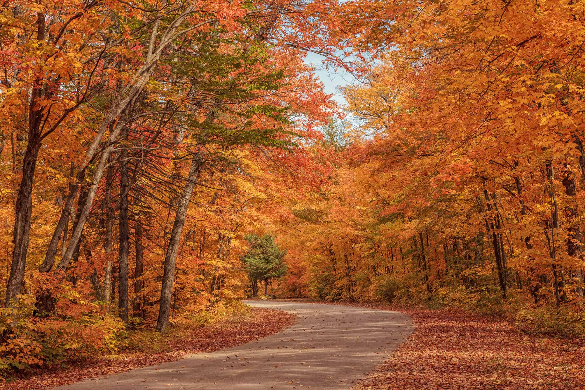 Gorgeous Fall Wallpaper Algonquin Provincial Park 3 Essential Hikes Explore