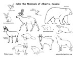 Grassland Biome Animal Coloring Page