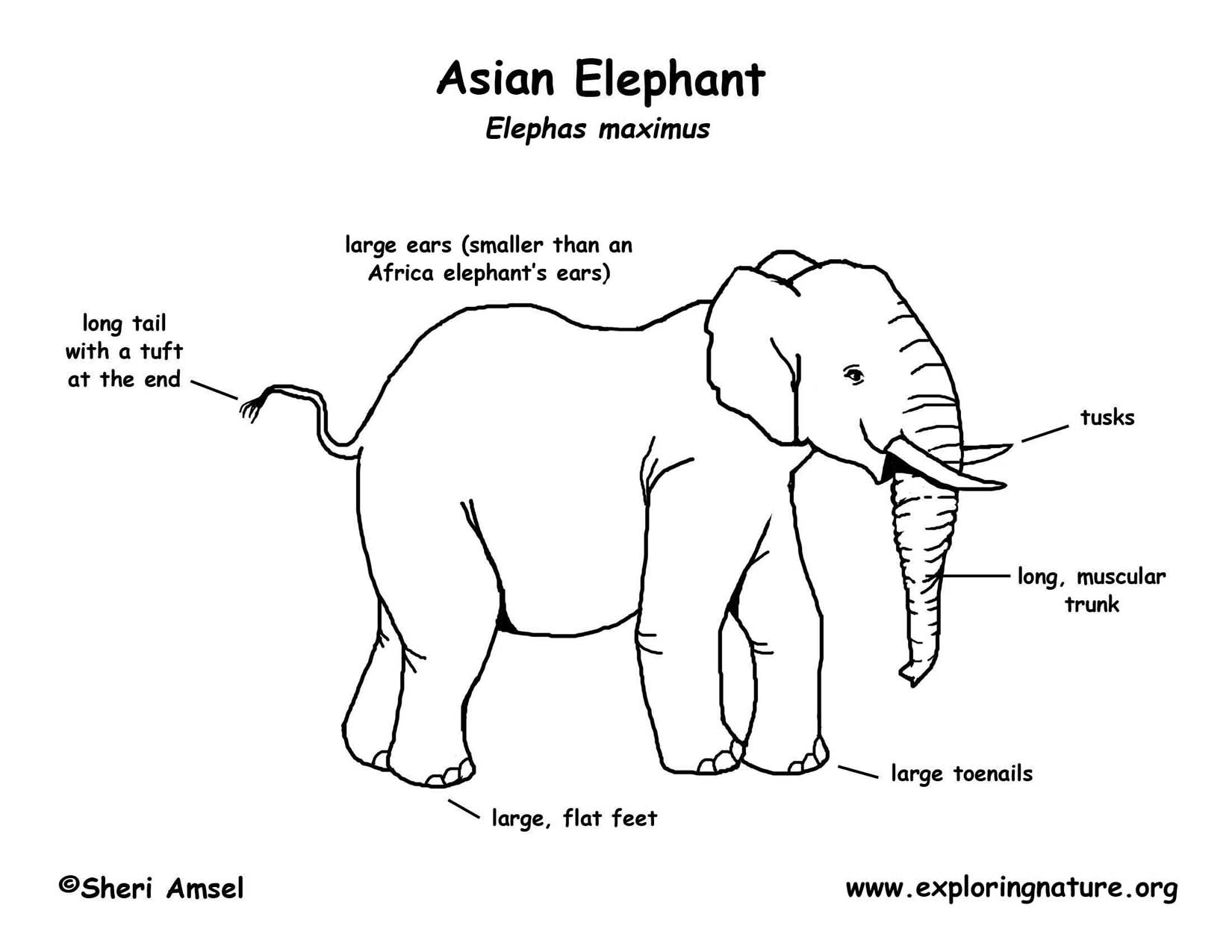 elephant diagram