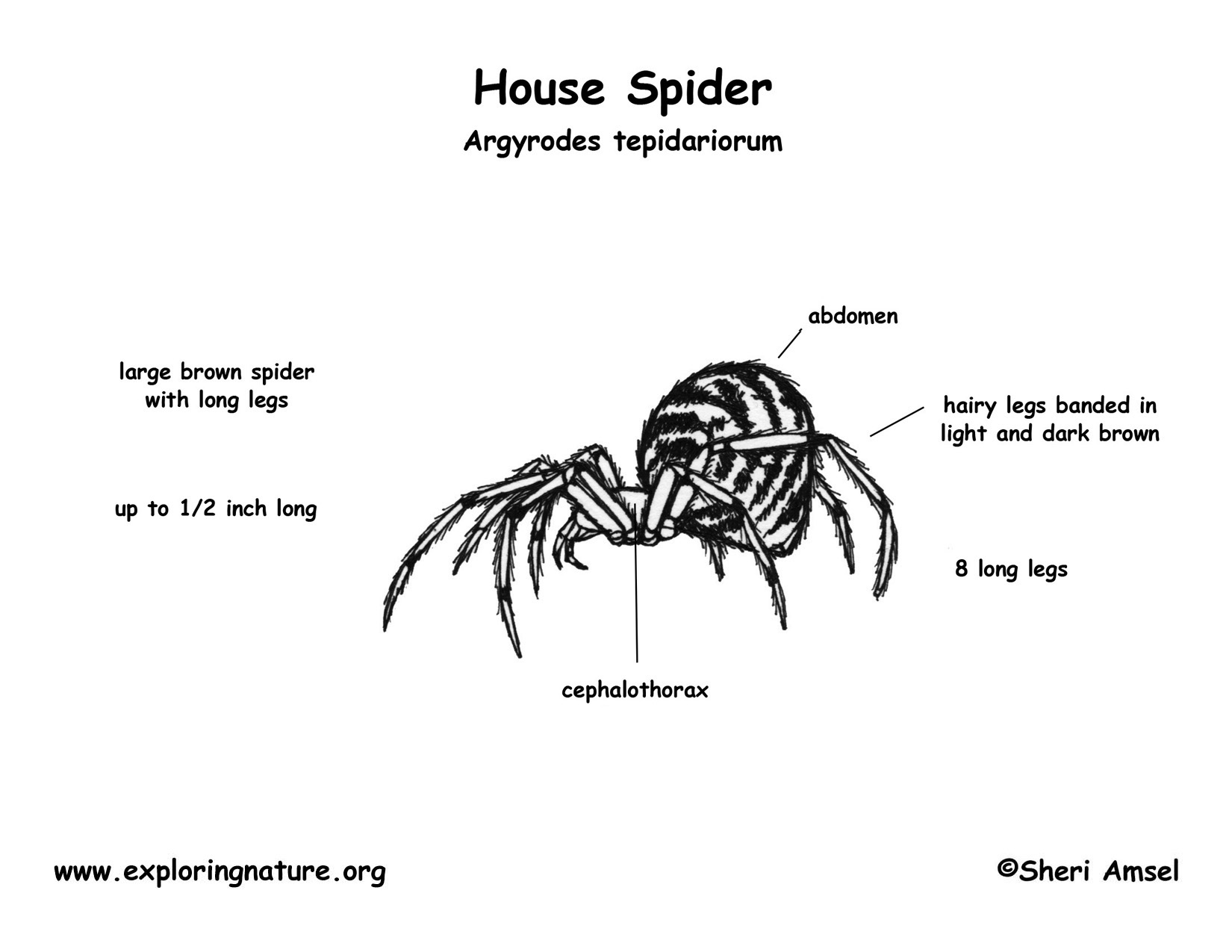 phylum arthropoda diagram
