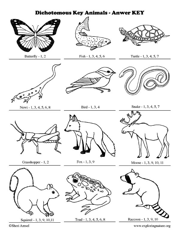 Dichotomous Key For Animals