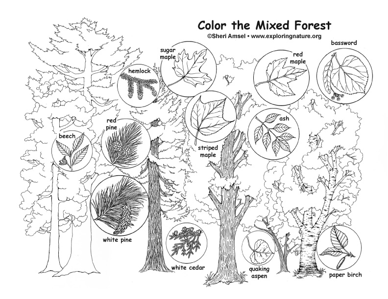 Mixed Forest Coloring Page