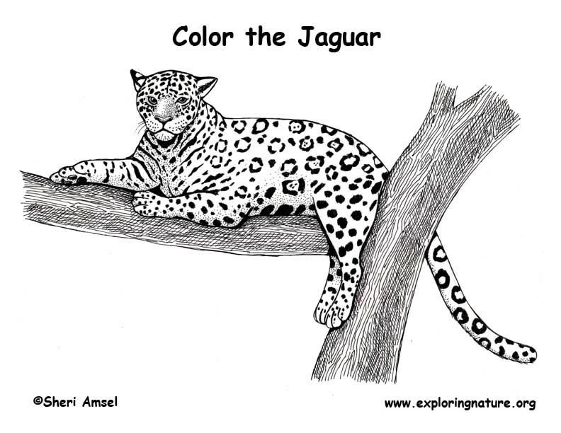 Jaguar Kes Diagram - Engine-diagramviddyup