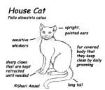 Cat Body Parts Diagram