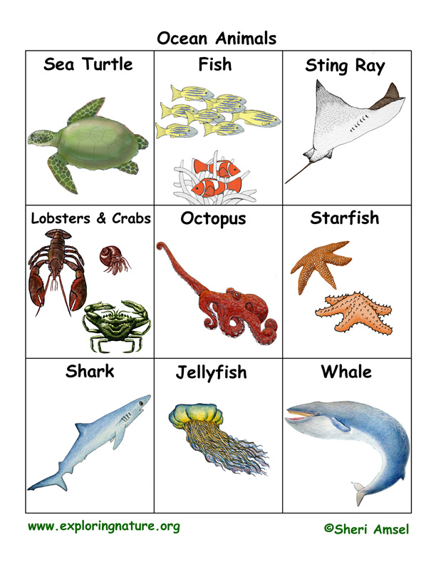 Reference Format Web Page Printf C Reference Ocean Animal Flashcards