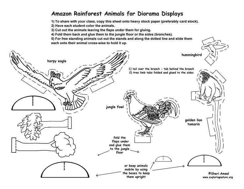 Amazon Rainforest Diorama