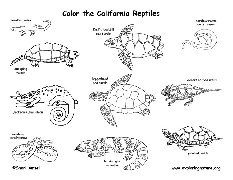 Coloring Pages Of Reptiles - Costumepartyrun