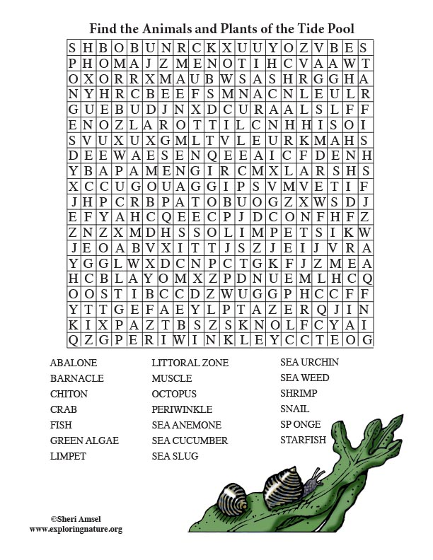 Tide Pool Word Search (Adults)