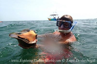 Conch Snorkeling Isla Holbox VIP Holbox