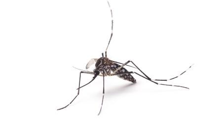 Metodistas se mobilizam no combate ao mosquito