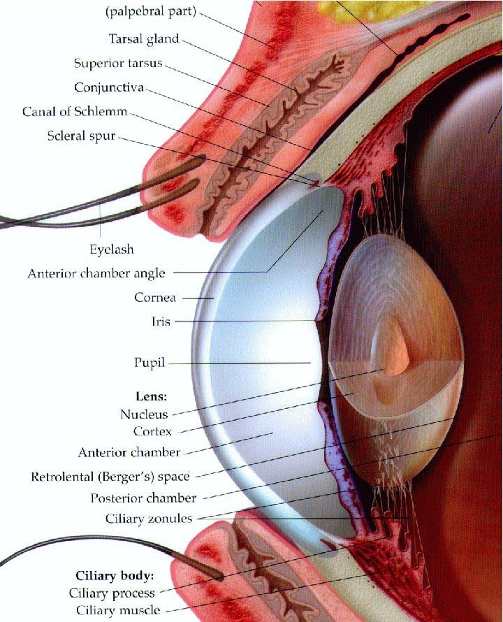 eyech3-ihtml