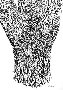 Baum 01, im Rosensteinpark Stuttgart 60 x 42 cm - Tusche auf Zeichenkarton 2016