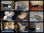 catsforkittylornerblog
