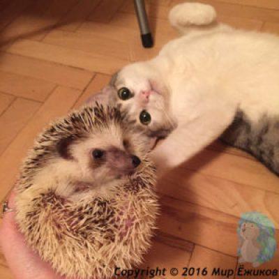Мицу и Ворс