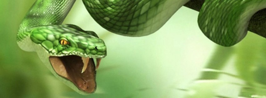 Cute Male Baby Wallpapers Angry Snake Facebook Cover Timeline Photo Banner For Fb