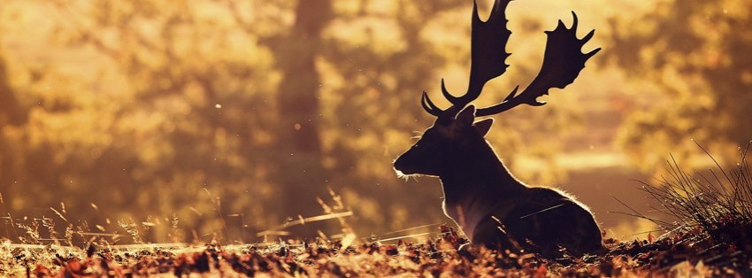Cute Wallpaper Patterns Deer Facebook Cover Timeline Photo Banner For Fb