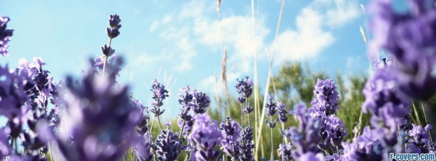 3d Wallpaper Lavender Elephant Head Wildflower Paper Facebook Cover Timeline