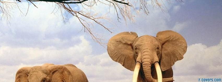 elephant facebook cover timeline photo banner for fb