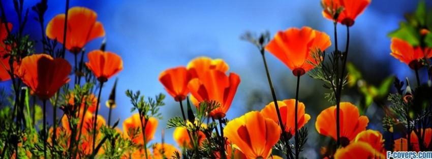 Flowers Poppy Orange Facebook Cover Timeline Photo Banner For Fb