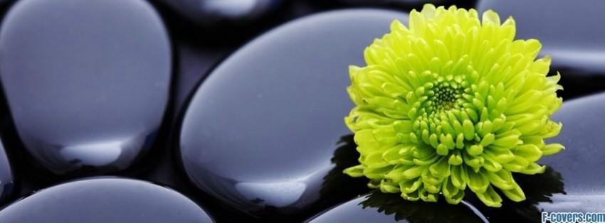 Cute Graffiti Wallpaper Flowers Stones Zen Facebook Cover Timeline Photo Banner For Fb
