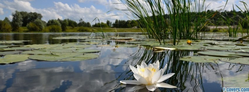 Cute Korean Art Wallpaper Flowers Water Lily Facebook Cover Timeline Photo Banner For Fb