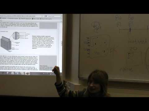 BioTech – Lecture 8
