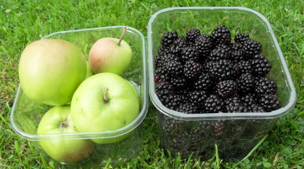 Foraged Blackberries and apples