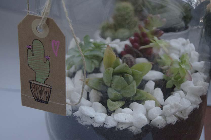 terrario cactus (4)