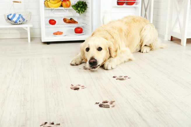 Dog Booties For Wood Floors Ivoiregion
