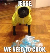 """35 Adorable Things To Get You Through Your """"Breaking Bad ..."""