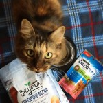 8 tips to optimize your cat's health + wellness
