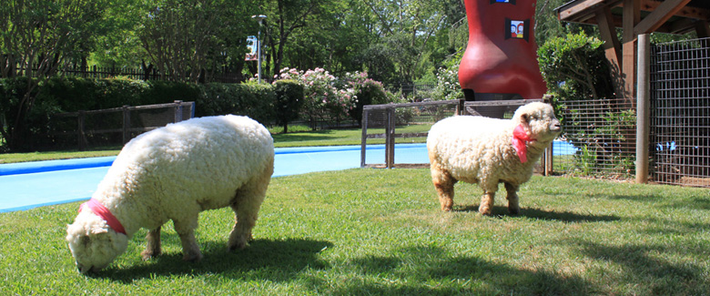 Mary's Little Lambs at Fairytale Town, a children's storybook park in Sacramento, California