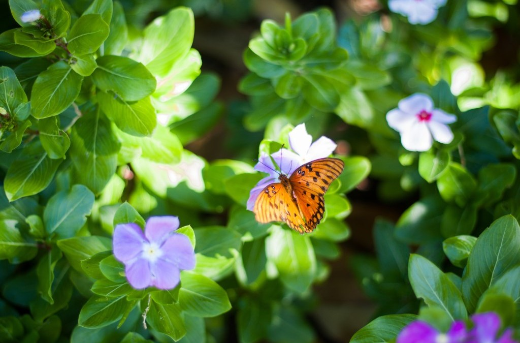 What God Sees: Empty Shell or Beautiful Butterfly?