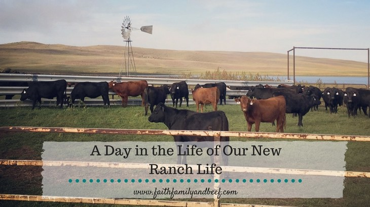 A Day in the Life of Our New Ranch Life