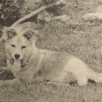 Fannie the 3-Legged Dog Recalls her First Photo