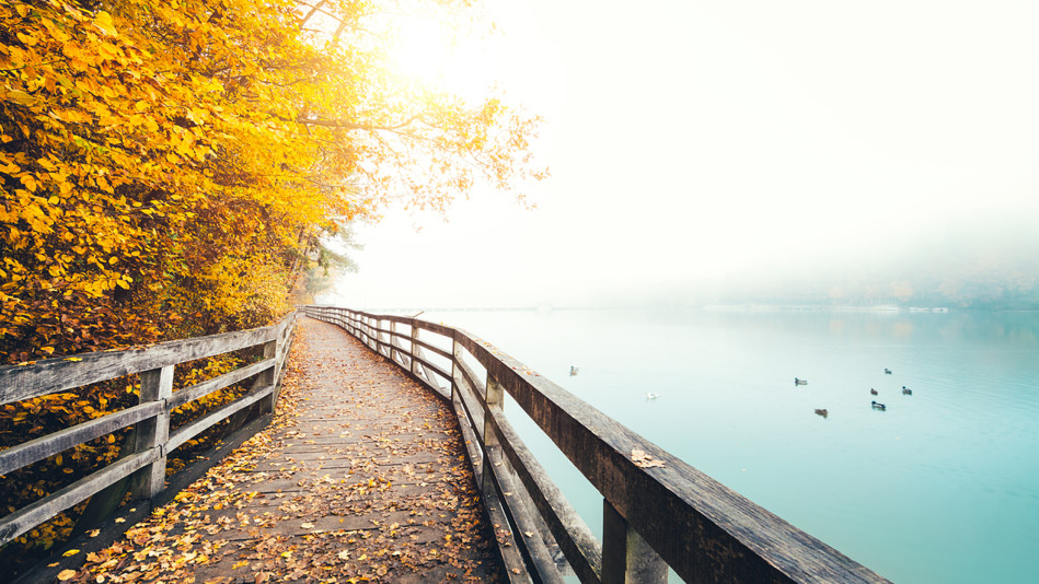 Free Fall Nature Wallpaper There Is No Magical Path By Virgil Welcome To Falcon