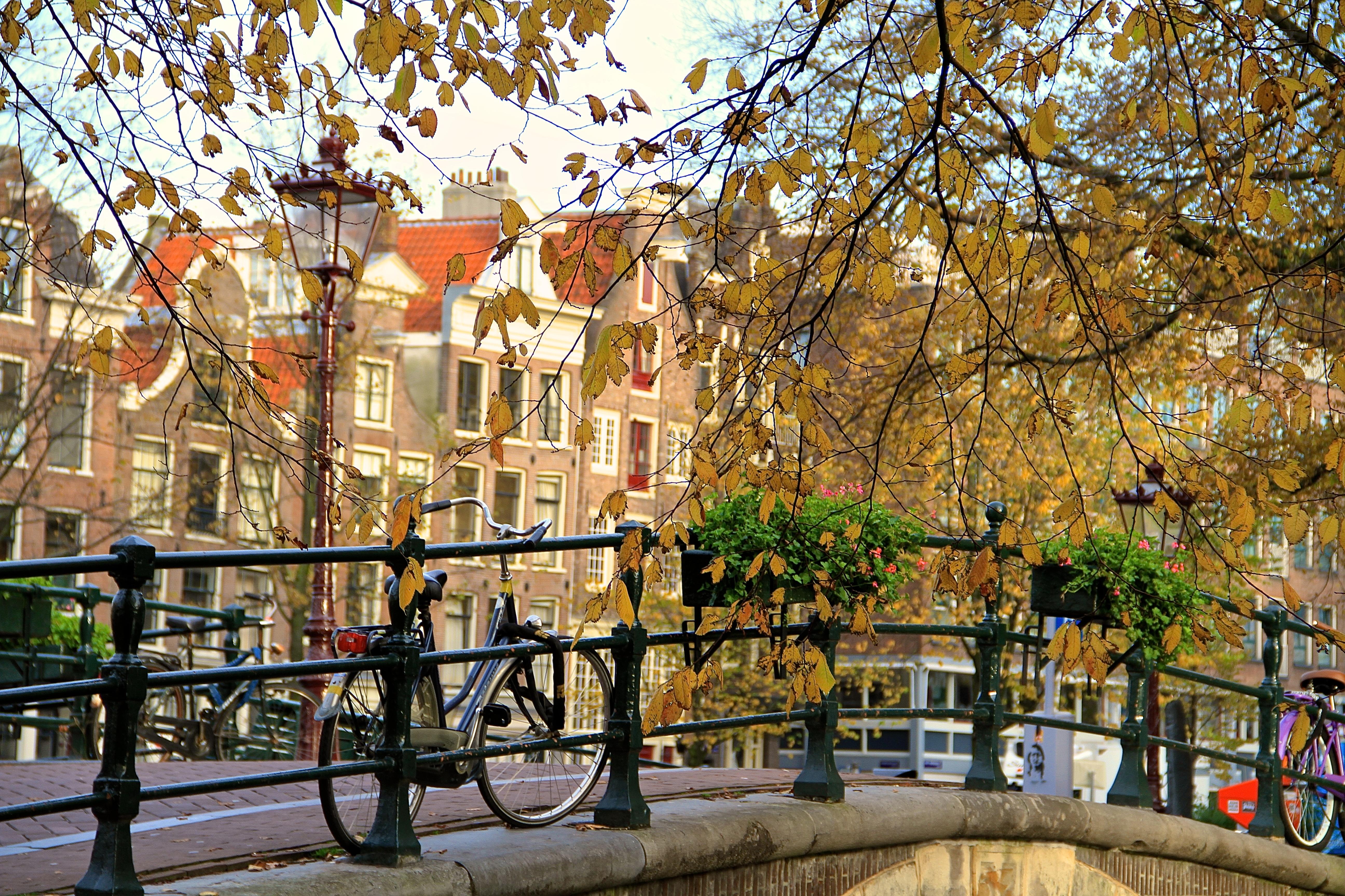 Autumn Leaves 3d Live Wallpaper Autumn Scene Of Amsterdam Bike On Bridge Falling Off
