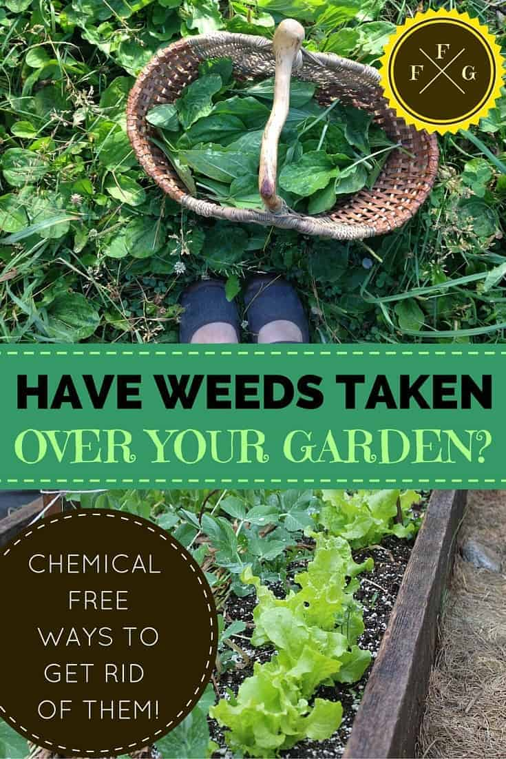 What to do when weeds have taken over your garden for How to get rid of weeds in garden