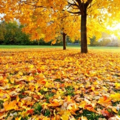 32 Fall Poems - Seasonal Poems about Autumn