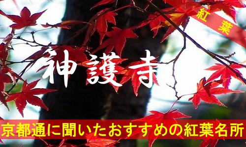 kouyou-kyouto-singozi-2086