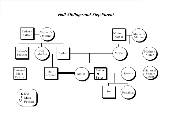 Putting those Half-Siblings on a Family Tree FamilyTree - family tree example