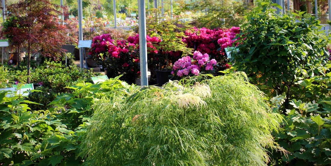 Shawnee Garden Center - FAMILY TREE NURSERY