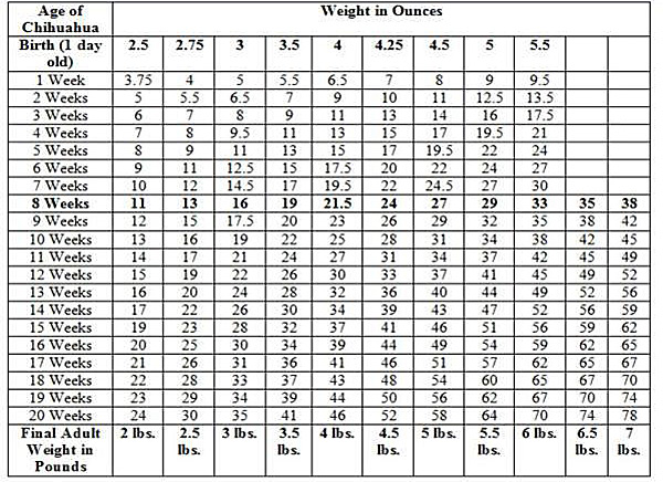 what is the ideal weight for a chihuahua? famous chihuahua - ideal weight chart
