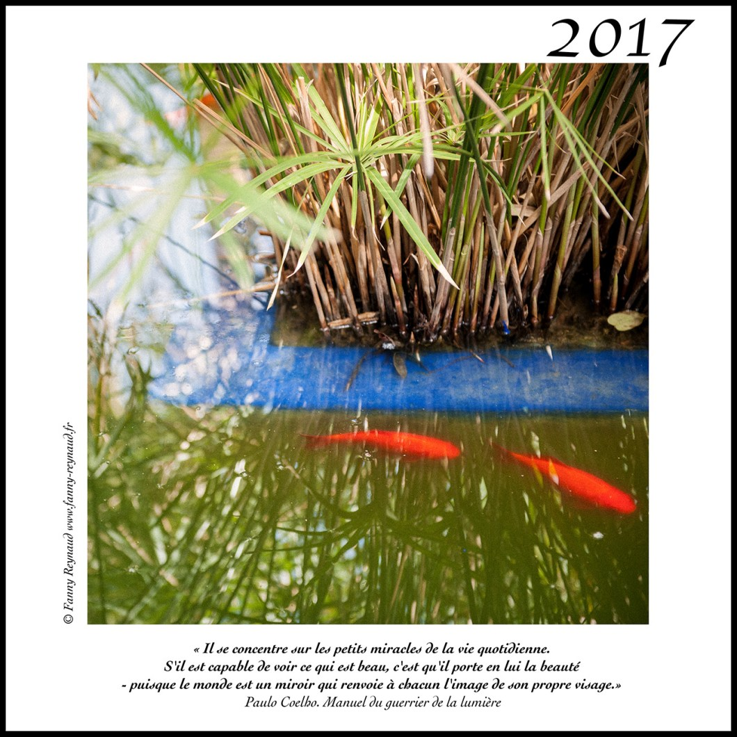 web-bonne-annee-2017