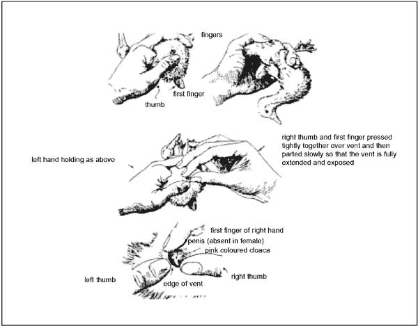 Chapter 5 MALE AND FEMALE REPRODUCTIVE SYSTEMS