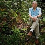 Una farfalla in onore di David Attenborough