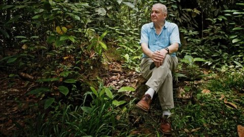 Una farfalla in onore di David Attenborough