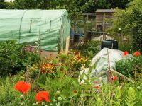 Allotment newsletter - Farnham Town Council